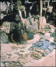 Récolte kanembu au Tchad